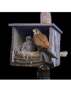 Caja nido GREFA para...